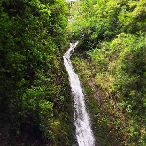 thin, tall waterfall flowing through lush greenery