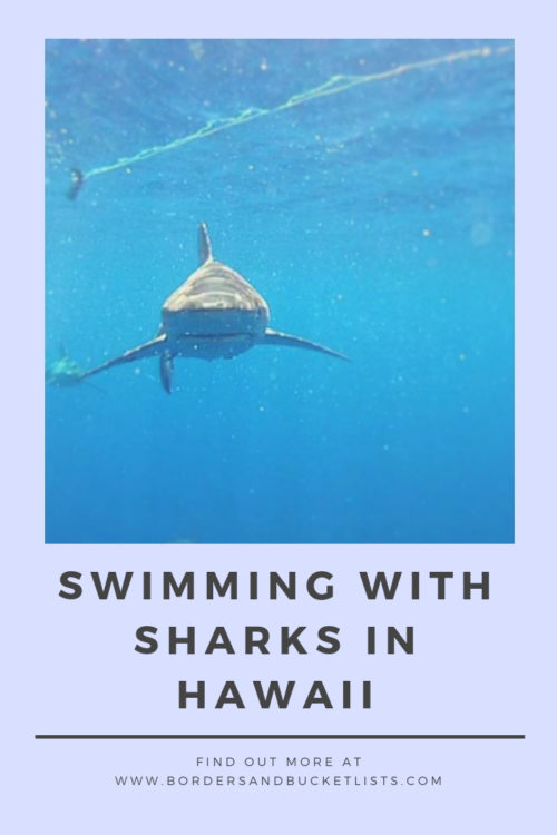 Swimming with Sharks in Hawaii Pin #hawaii #oahu #northshore #sharks #swimwithsharks #cagediving