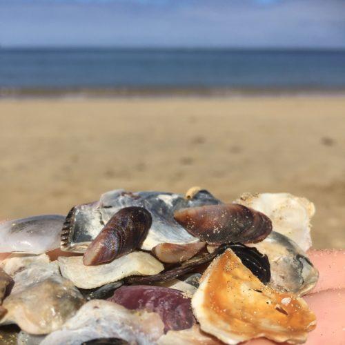 Kahana Bay Shells