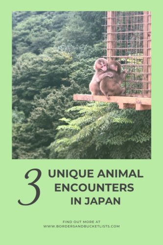 3 Unique Animal Encounters in Japan #animals #japan #monkeys