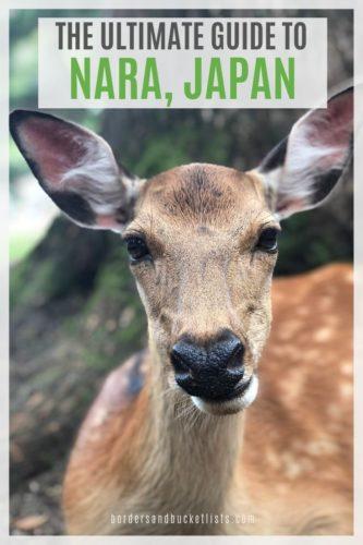 Ultimate Guide to Nara, Japan #nara #japan #deer