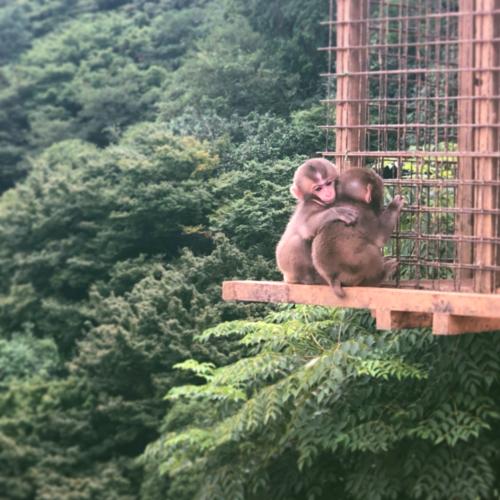 Iwatayama Monkeys