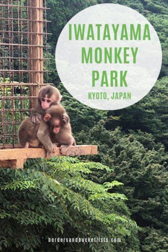 Iwatayama Monkey Park, Arashiyama, Kyoto, Japan #arashiyama #kyoto #japan #monkeys #monkey #iwatayamamonkeypark