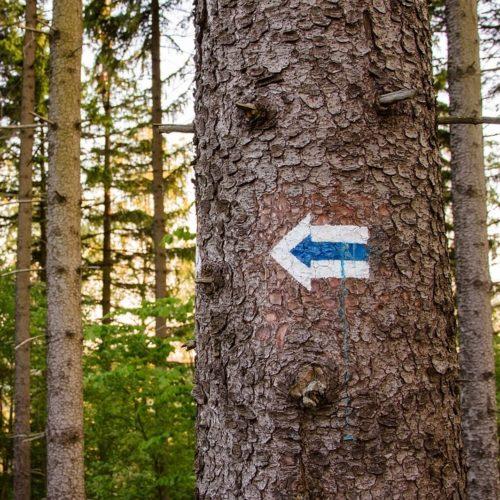 arrow on tree trail markers
