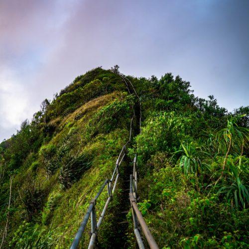 Stairway to heaven hike greenery Oahu sunrise hikes