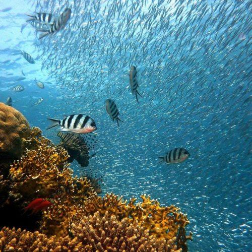 tons of marine life near reef reef-safe sunscreen