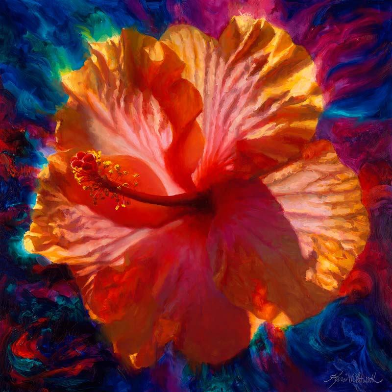 single orange and pink hibiscus on colorful background