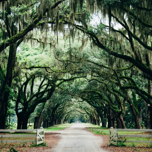 tree and spanish moss lined pathway in Savannah park Warm Winter Vacations in the USA
