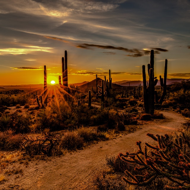 cactus lined path in Scottsdale at sunset