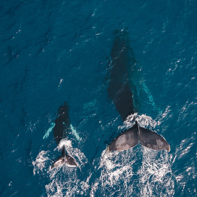 best time to go to hawaii to see whales
