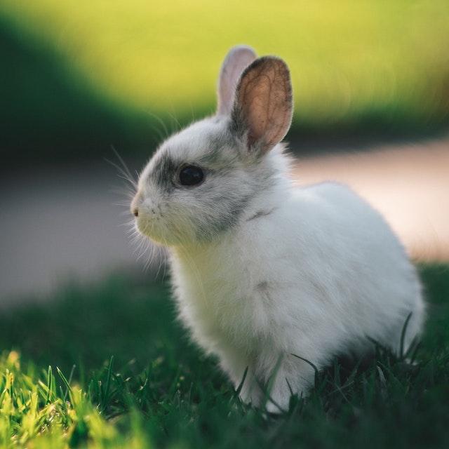 cute white rabbit in field